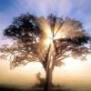 Nouvelle Année de Paix et de Bienêtre pour Tous