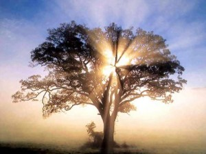 arbre-lumière